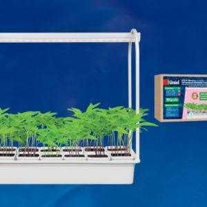 Набор «Минисад», светильник для растений светодиодный с подставкой ULT-P34-10W/SPLE IP40 WHITE 12